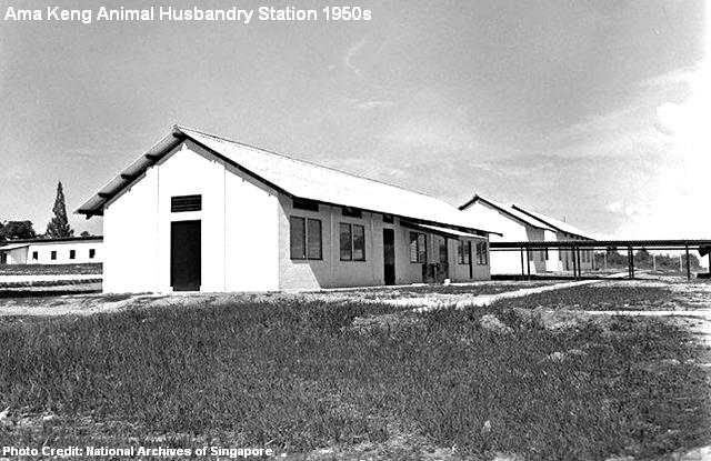 ama keng animal husbandry station 1950s