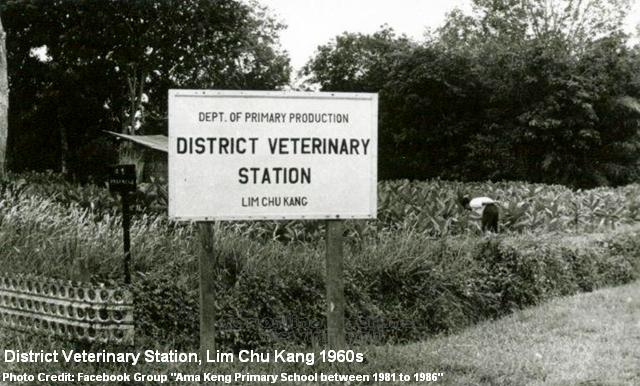 district veterinary station at lim chu kang 1960s