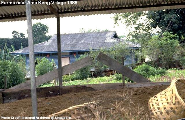 farms at ama keng village 1986