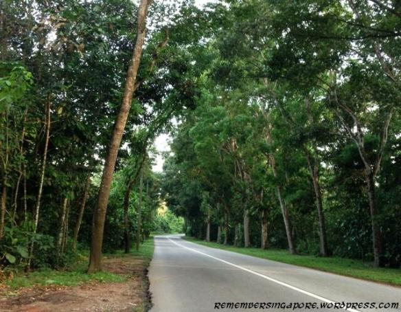 Searching for the Remnants of Ama Keng | Remember Singapore