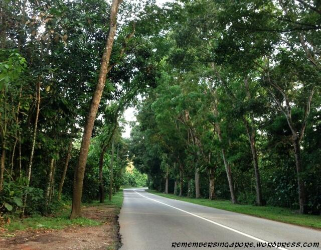 lim chu kang road2