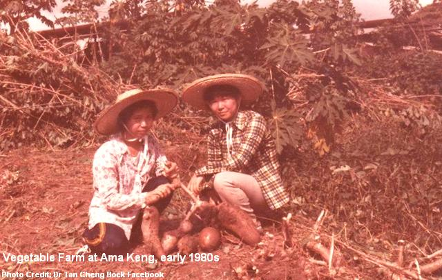 vegetable farm at ama keng early 1980s