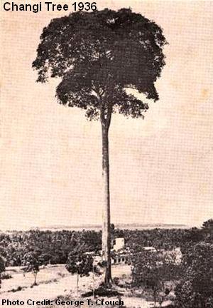 changi tree 1936