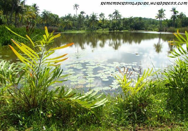 pulau ubin3 2014