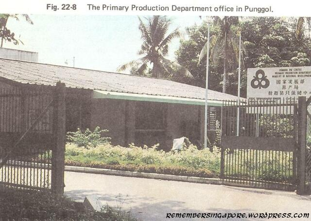 1982 punggol primary production department