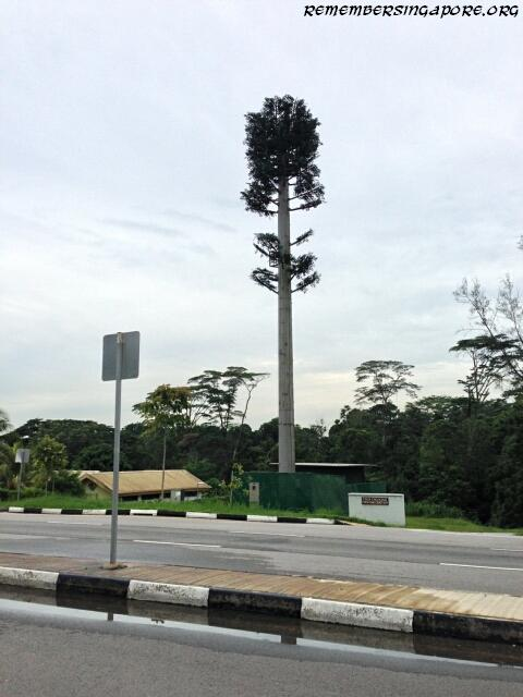 cell phone tree at old choa chu kang road1