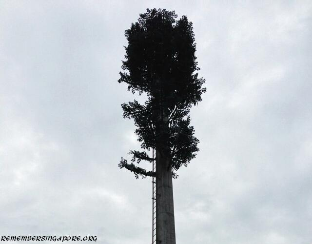 cell phone tree at old choa chu kang road2