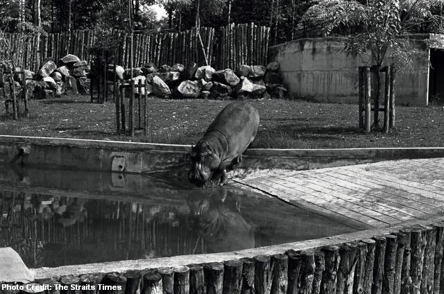 sg50 1974 singapore zoo