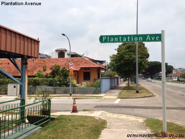 plantation avenue1 2016
