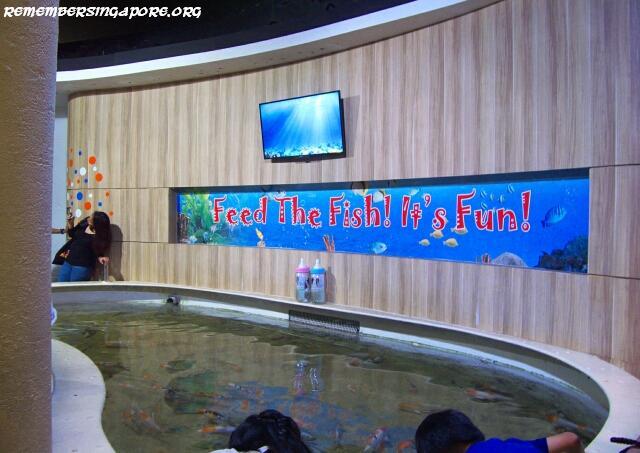 underwater world koi pond