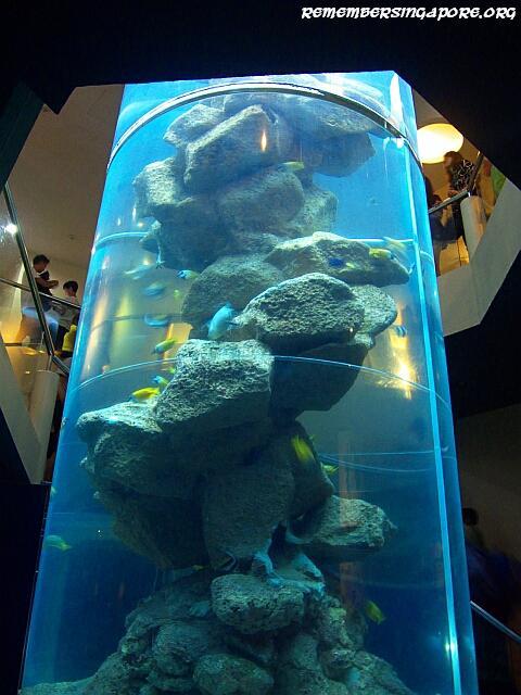 underwater world sentosa galleries2