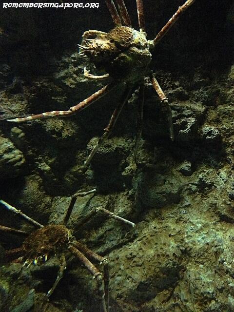 underwater world sentosa galleries3