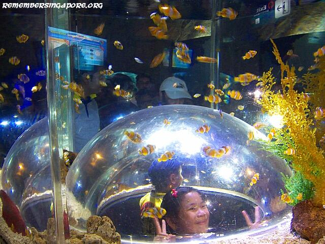 underwater world sentosa galleries5