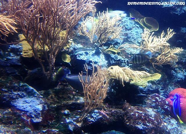 underwater world sentosa galleries7