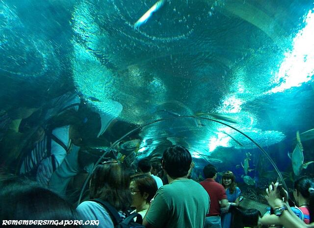underwater world tunnel1