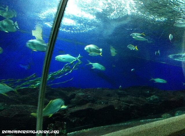 underwater world tunnel2