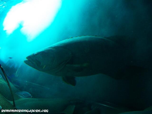 underwater world tunnel4