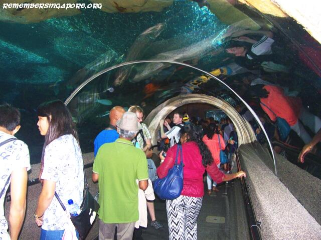 underwater world tunnel6