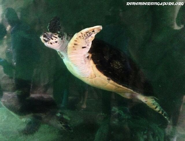 underwater world turtle viewing chamber3