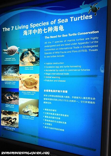 underwater world turtle viewing chamber4