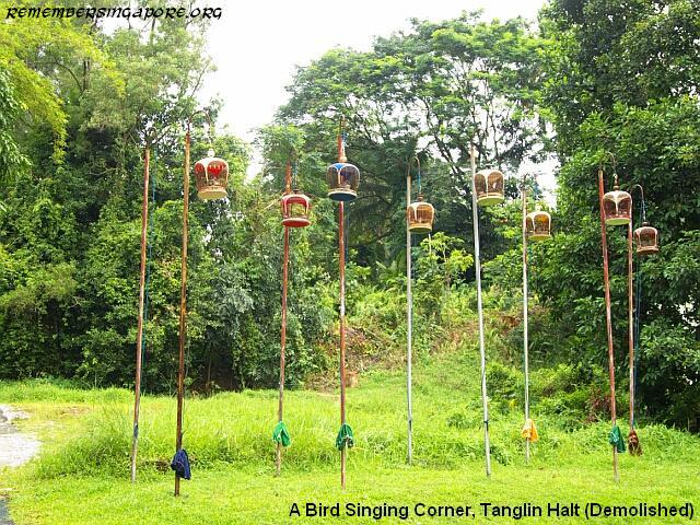tanglin-halt-bird-singing-corner