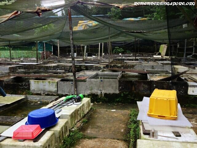 last-fish-farm-seletar-west-farmway-4-2