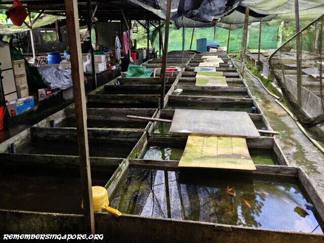 last-fish-farm-seletar-west-farmway-4-3