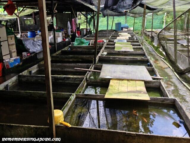 last-fish-farm-seletar-west-farmway-4-3