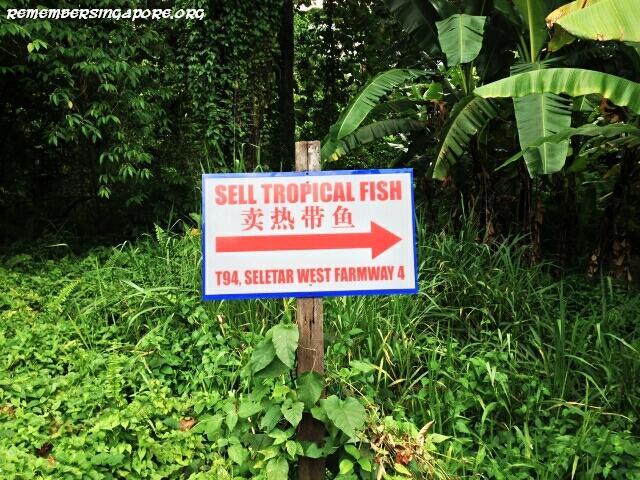 last-fish-farm-seletar-west-farmway-4-6